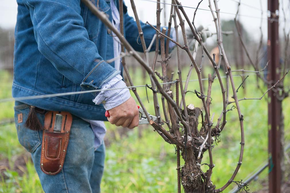 pruningvineyards