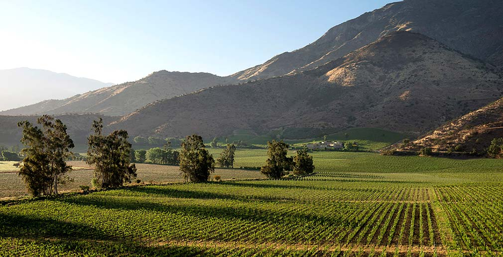 Maipo Valley Chile