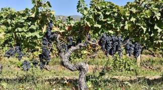 Vranac kao vinski otisak regiona