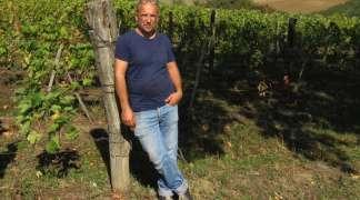 Berba u Sagmajsterovim vinogradima