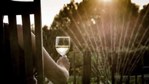 Srpska vina za leto 2020