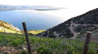 Tajna vinskog trougla (I deo)