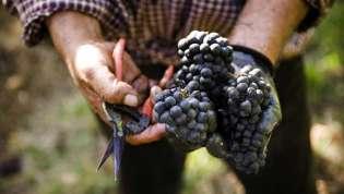 U vinogradu je istina!