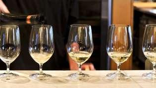 Pet idealnih belih vina za vinske početnike u Srbiji