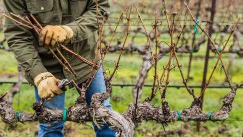 Vinogradari, ljudi iz srca vinograda